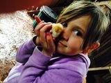 Children enjoy some time with baby chickens Peak Wilderness Experiences 346 Hunter Road