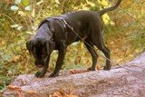 Dog walking in Hastings and St Leonards-on-Sea