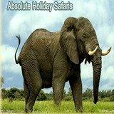 Profile Photos of ABSOLUTE HOLIDAY SAFARIS