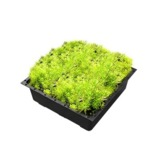 Green Roof Trays