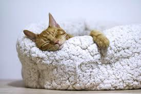 Profile Photos of Best Cat Beds Aspire Suite 19 - Photo 1 of 1