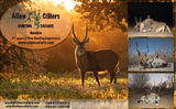 New Album of Cilliers Safaris