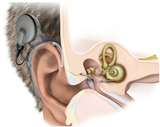 New Album of Allison Audiology & Hearing Aid Center, P.C.