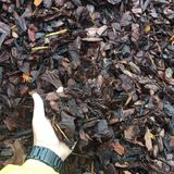 Profile Photos of Foothills Mulch & Stone