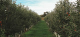 Profile Photos of Lakeland Orchard