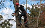 Webster Groves Tree Service, St. Louis