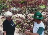 St. Charles Tree Service, St. Louis