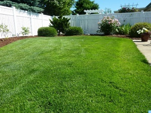 Profile Photos of DTX Landscaping and Lawn Care 603 Eagle Drive, 32 - Photo 2 of 4