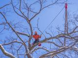 New Album of Top Tree Service Albuquerque
