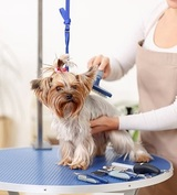 Animal Kingdom Grooming & Daycare, Henderson