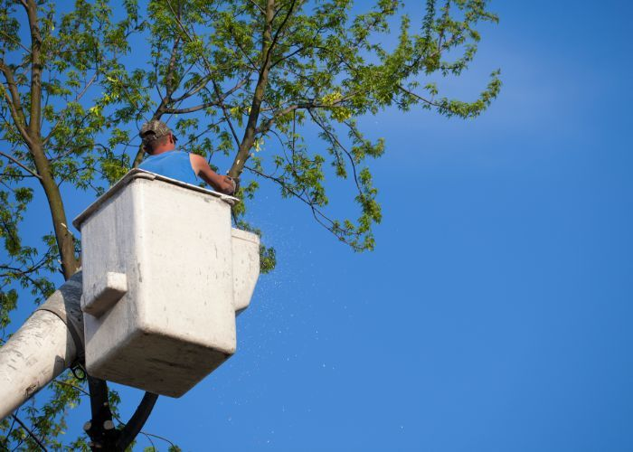 Profile Photos of Rhode Island Tree Removal 118 Willow St #1 - Photo 2 of 3