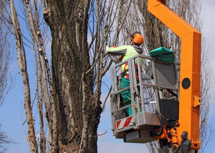 Profile Photos of Rhode Island Tree Removal 118 Willow St #1 - Photo 3 of 3