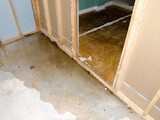 Profile Photos of Water Damage Restoration Near Me Queens