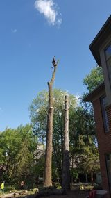 New Album of CA Tree Removal of Newmarket