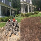 Profile Photos of Milwaukee Stump Grinding & Removal