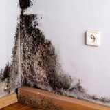 Profile Photos of Mold Remediation Baton Rouge