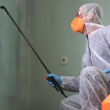 Mold Remediation Meridian