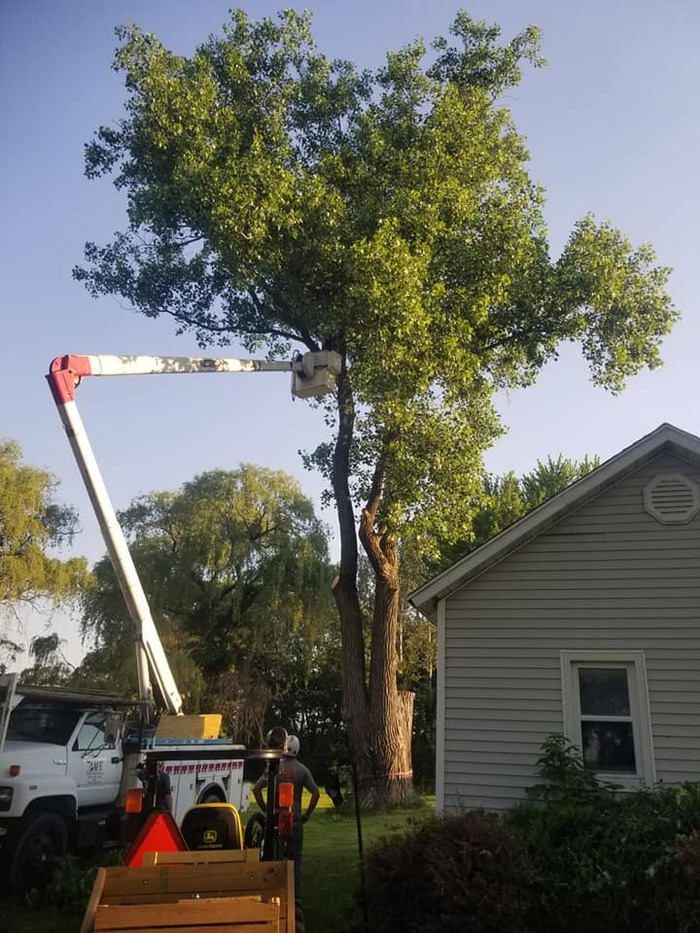 New Album of Bay Tree Removal Service 260 Industrial Pkwy W - Photo 5 of 6