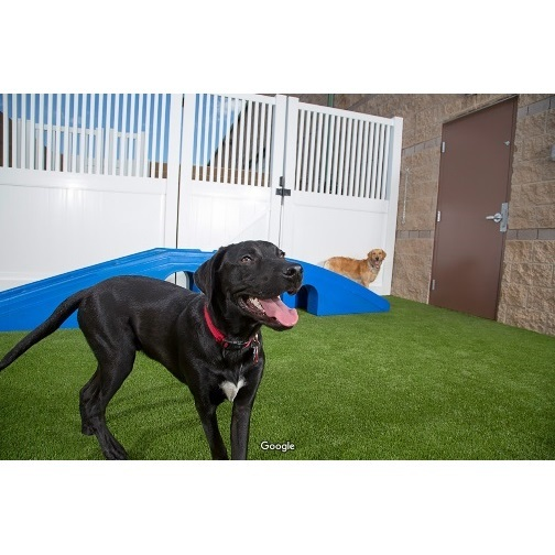 Profile Photos of Camp Bow Wow Lafayette 114 Eunice Street - Photo 4 of 4