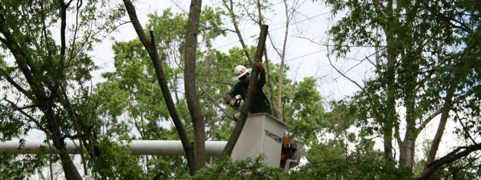 Trees require regular maintenance and pruning to ensure the full longevity of their life. <br />