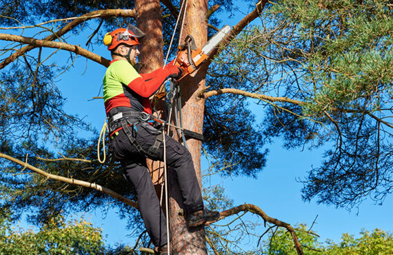 Need tree removal services in Toronto? Contact our team!<br /> <br /> https://www.fivestartreecare.ca/ Our Services of Five Star Tree Services 156 Duncan Rd - Photo 6 of 34