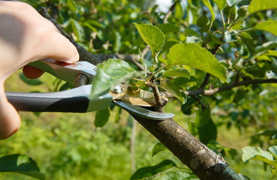 Toronto Tree Care Pruning Services Our Services of Five Star Tree Services 156 Duncan Rd - Photo 11 of 34
