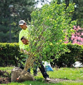 Our Services of Five Star Tree Services 156 Duncan Rd - Photo 25 of 34
