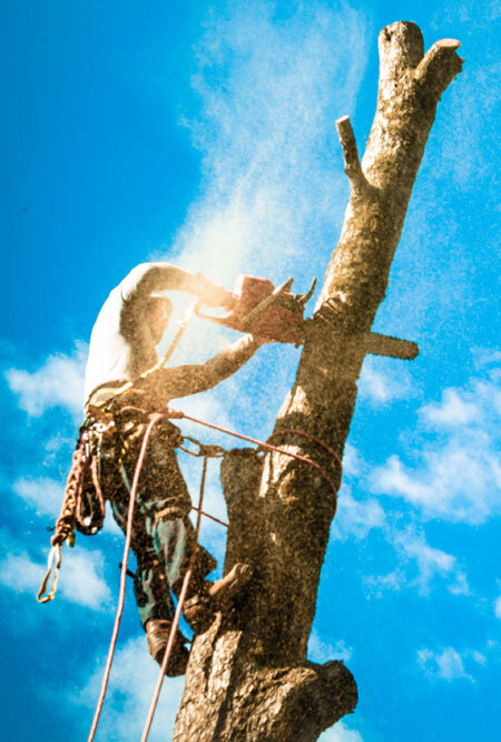 Check out our Tree Removal Services! https://www.fivestartreecare.ca/services/removal-services/tree-removal/ Our Services of Five Star Tree Services 156 Duncan Rd - Photo 29 of 34