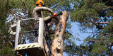 If you think that you are in need of tree removal services contact us to find out your best options.<br />