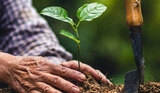 Planting and maintaining trees can provide extraordinary benefits to you, your family, and your property. <br /> <br /> https://fivestartreecare.ca/ Five Star Tree Services 156 Duncan Rd