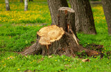 Tree Stump Removal Services in Toronto<br /> <br /> https://www.fivestartreecare.ca/ Five Star Tree Services 156 Duncan Rd