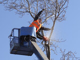 We provide affordable tree removal services in Toronto.<br />