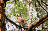 Best tree care services in Toronto with Five Star Tree Services Five Star Tree Services 156 Duncan Rd