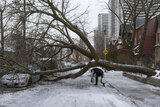 Emergency Tree Removal Services - 2 Five Star Tree Services 156 Duncan Rd