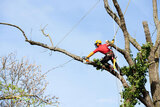 Five Star Tree Services 156 Duncan Rd