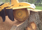 Check out our Stump Grinding Services today! - https://www.fivestartreecare.ca/services/tree-care/stump-grinding/ Five Star Tree Services 156 Duncan Rd