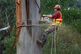 Target Tree Service and Removal, Sequim