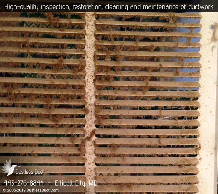 Profile Photos of Dustless Duct | Air Duct Cleaning Ellicott City 8720 Ridge Rd - Photo 7 of 8