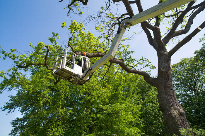 New Album of Tree Service Denver 56 Hazel ct. - Photo 2 of 7