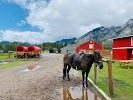 Warner Stables - Banff Trail Riders 100 Sundance Road