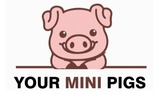 Your Mini Pigs, Temecula