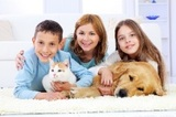EXPERT PET CARPET CLEANER, Chem-Dry of Allen County IV, Columbia City