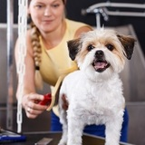 Dog Grooming Leicester Mobile Paws 48 Western Road