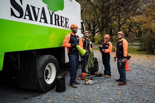 New Album of SavATree - Tree Service & Lawn Care 15558 East Hinsdale Circle - Photo 3 of 3