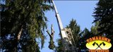 Profile Photos of Tomahawk Tree Service