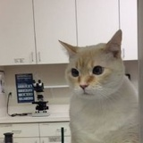 Profile Photos of Angel Animal Hospital
