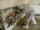 Profile Photos of Drymore Mold Removal