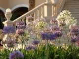 Enjoy the splendour of flowers and you will feel like in paradise. The St. Regis Mardavall Mallorca Resort Passeig Calvia s/n