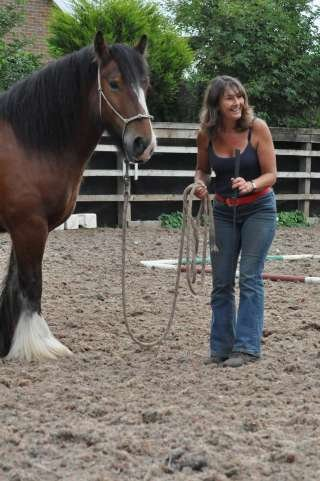 Instinctive Horse Training
