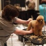 Profile Photos of Merryfield School of Pet Grooming